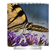 The Butterfly Shower Curtain by Lori Tambakis