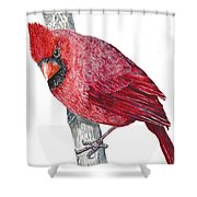 The Cardinal Shower Curtain