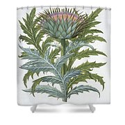 The Cardoon, From The Hortus Shower Curtain