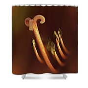 The Center Shower Curtain