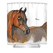 The Chestnut Arabian Horse 2a Shower Curtain