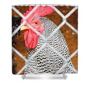 The Chicken Fence Shower Curtain