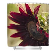 The Child Of Nature Shower Curtain