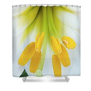 The Christmas Lilly Shower Curtain