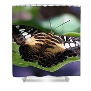 The Clipper 01 Shower Curtain