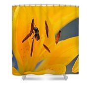The Collector 7456 Shower Curtain