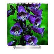 The Color Purple Shower Curtain by Kathleen Struckle