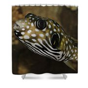 The Colorful Fish Shower Curtain