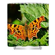The Comma -- Polygonia C-album Shower Curtain