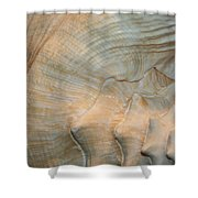 The Conch Shower Curtain
