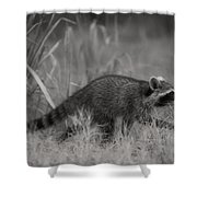 The Coon Walk Shower Curtain