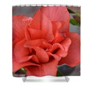 The Coral Carnival Photo C Shower Curtain