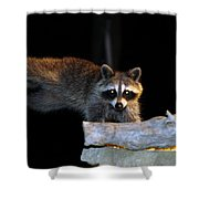 The Cornbread Bandit Homestretch Shower Curtain