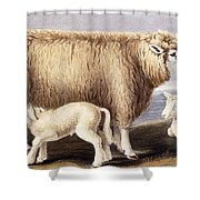The Cotswold Breed Shower Curtain