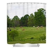 The Cows Of May Shower Curtain