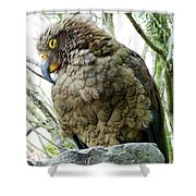 The Crafty Kea Shower Curtain