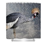 The Crane Shower Curtain