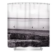 The Cranes In Line Shower Curtain