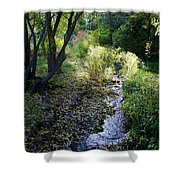 The Creek At Finch Arboretum 2 Shower Curtain