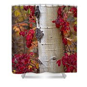 The Crimson Trace Shower Curtain