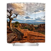 The Crooked Old Tree Shower Curtain