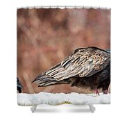 The Crow And Vulture Shower Curtain