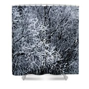 The Crystal Forest Shower Curtain
