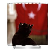 The Curious Cat Shower Curtain