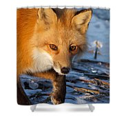 The Curious One Shower Curtain
