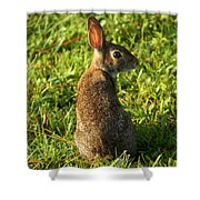 The Curious Rabbit Shower Curtain