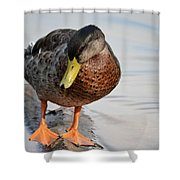 The Cute Brown Duck Shower Curtain