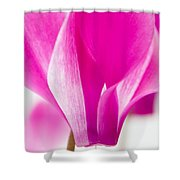 The Cyclamen That Fought Back Shower Curtain