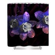 The Daffodil Trio Shower Curtain
