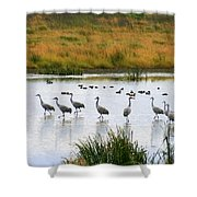 The Dance Of The Sandhill Cranes Shower Curtain