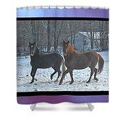 The Dancing Paso Fino Stallions Shower Curtain