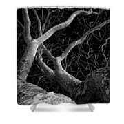 The Dark And The Tree 2 Shower Curtain by Fabio Giannini