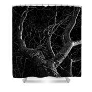 The Dark And The Tree Shower Curtain
