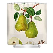 The D'auch Pear Shower Curtain by William Hooker
