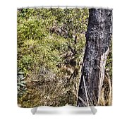 The Death Of A Tree V4 Shower Curtain