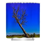 The Death Of  A Tree V5 Shower Curtain