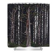 The Deep Dark Sharp Forest Shower Curtain