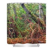 The Deep Rainy In The Mysterious Forest Shower Curtain