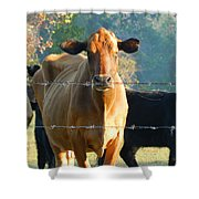 the Defiant One Shower Curtain