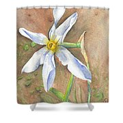 The Delicate Autumn Lady - Narcissus Serotinus Shower Curtain