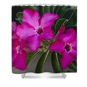 The Desert Rose  Shower Curtain