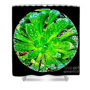 The Dew No.12 Shower Curtain