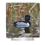 Diving Duck Shower Curtain