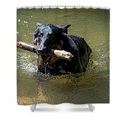 The Dog Days Of Summer Shower Curtain