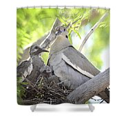 The Dove Family  Shower Curtain