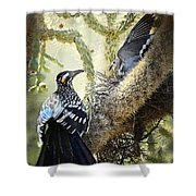 The Dove Vs. The Roadrunner Shower Curtain